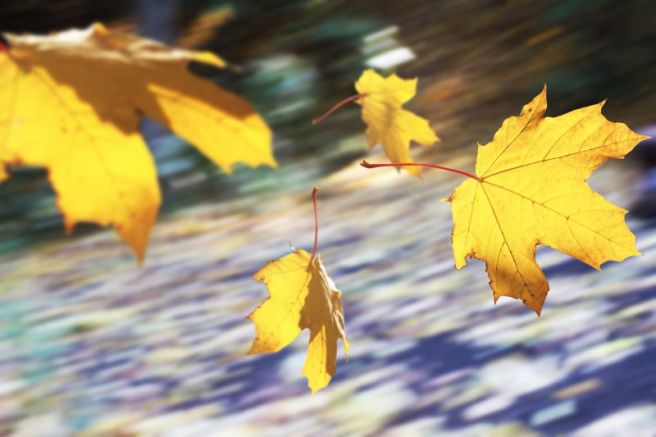 leaves, blowing, storm front, confetti