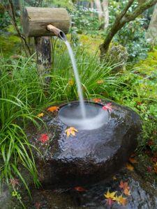 water basin, wildlife