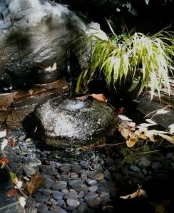 water basin, red-tail hawk