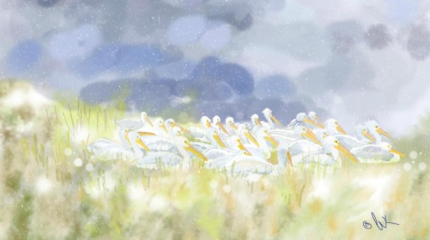 Pelicans in a Storm, ©Chris Kapsa