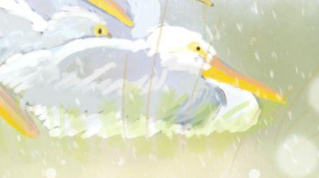 pelicans in storm